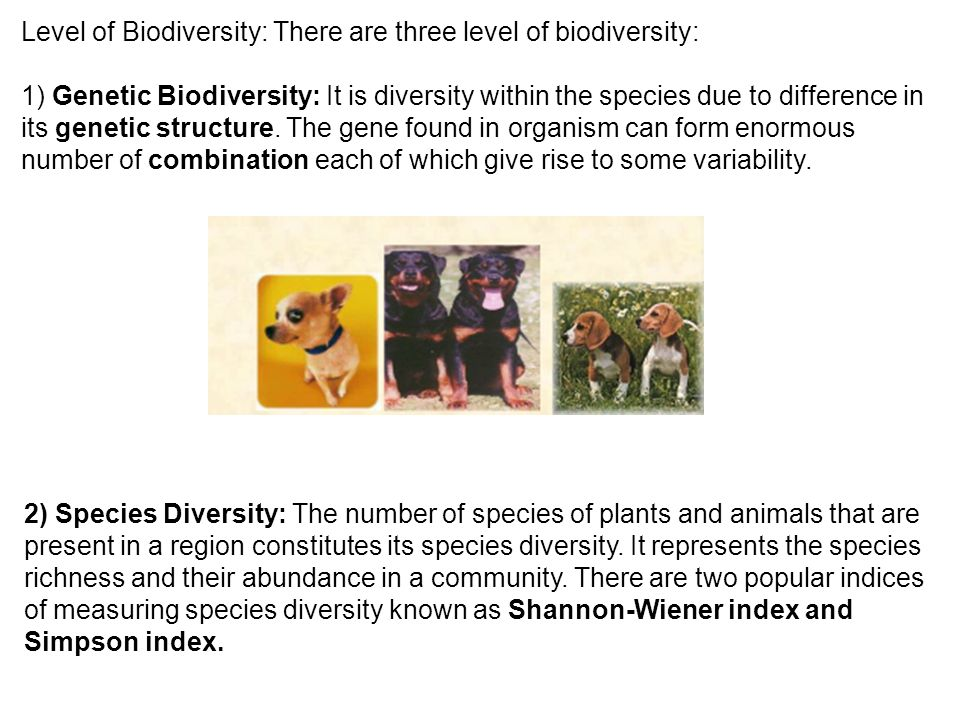 Level of Biodiversity: There are three level of biodiversity:
