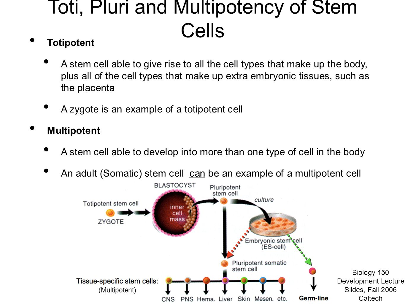 Section #8: An Introduction to Stem Cells - ppt video online