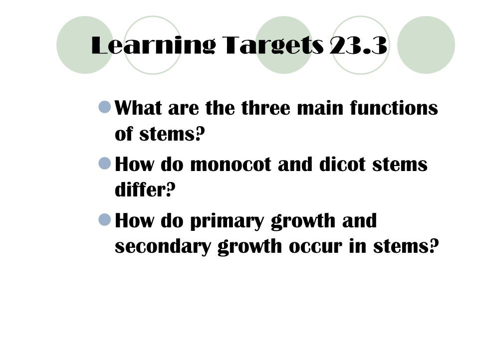 Learning Targets 23.3 What are the three main functions of stems