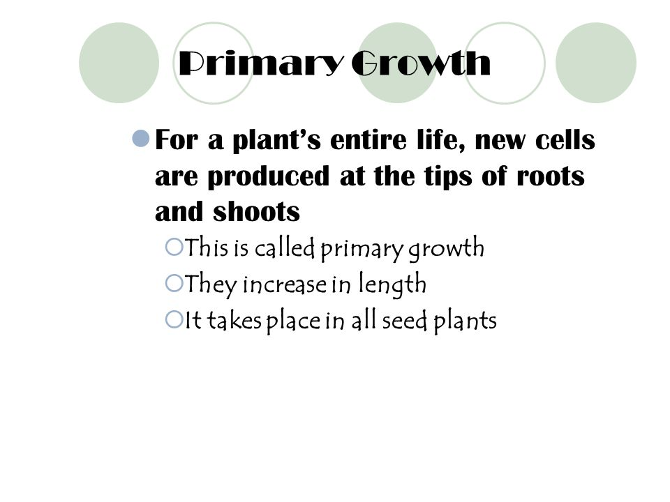 Primary Growth For a plant's entire life, new cells are produced at the tips of roots and shoots. This is called primary growth.