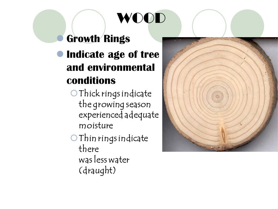 WOOD Growth Rings Indicate age of tree and environmental conditions