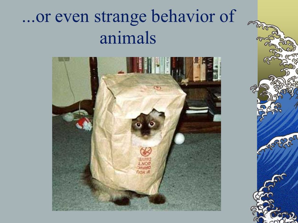 ...or even strange behavior of animals