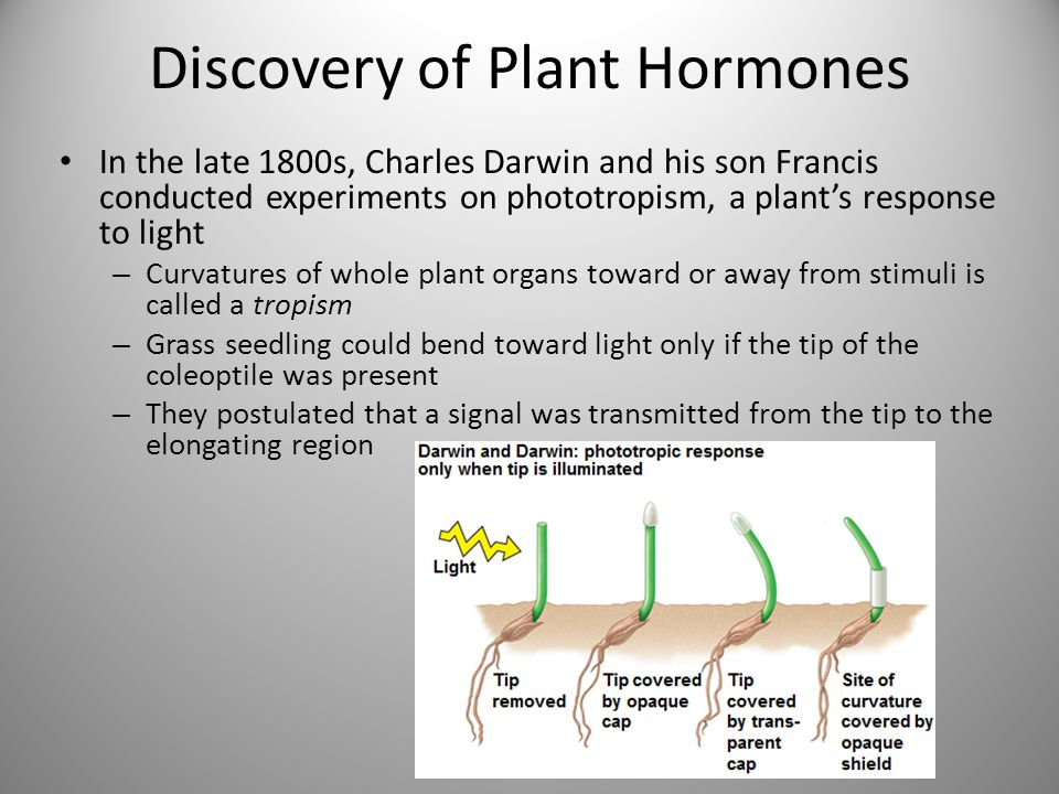 what is the stimulus in this experiment plant hormones