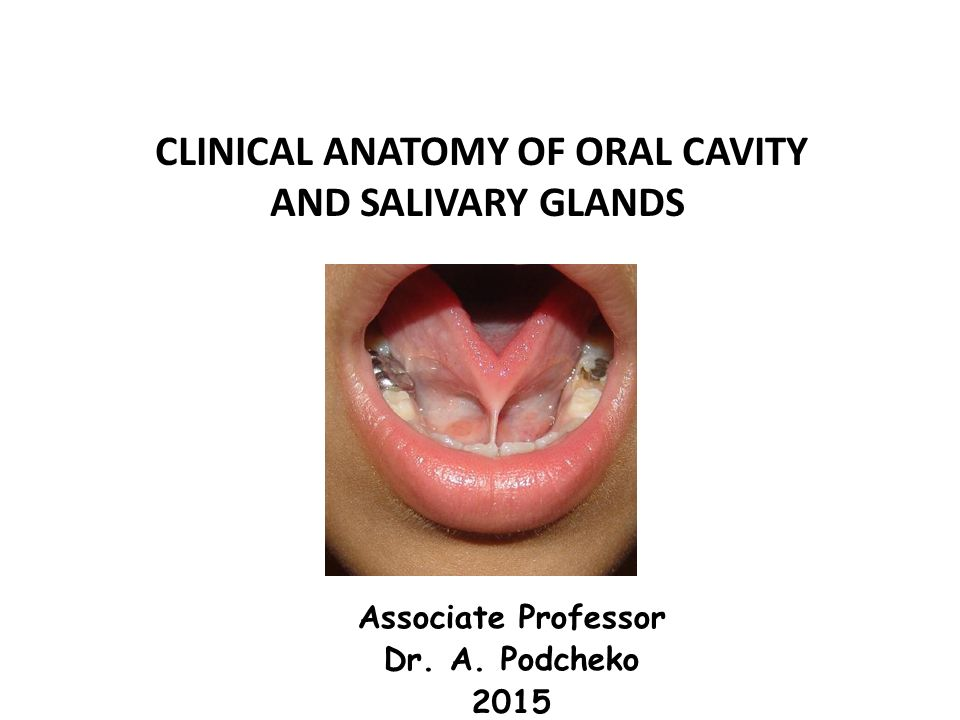 Clinical Anatomy Of Oral Cavity Ppt Download