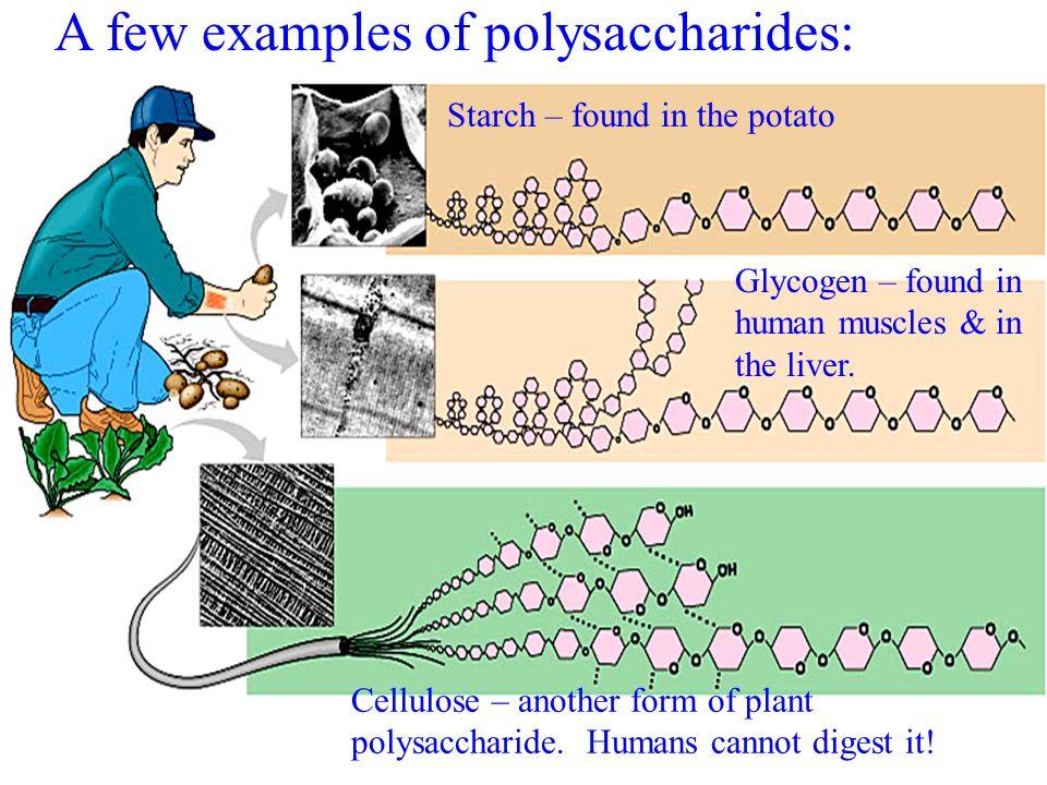 תוצאת תמונה עבור polysaccharides examples what you need to know about carbs What you need to know about carbs A few examples of polysaccharides 3A