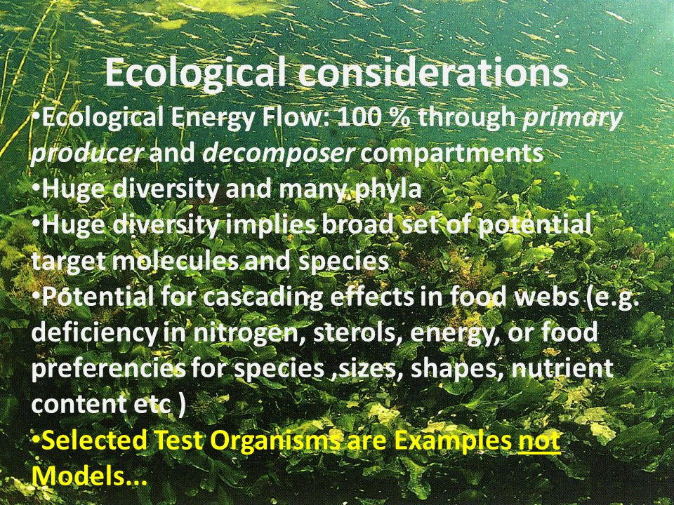 Ecological considerations