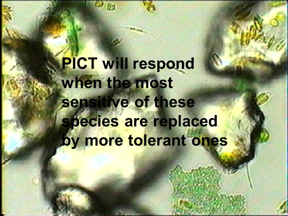 PICT will respond when the most sensitive of these species are replaced by more tolerant ones