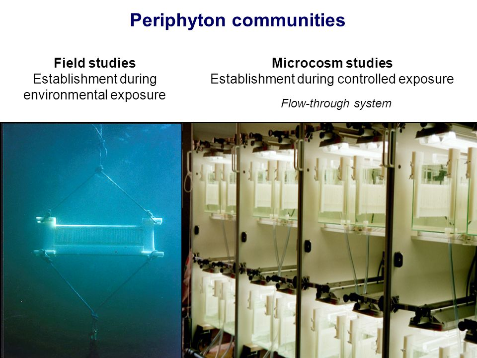 Periphyton communities