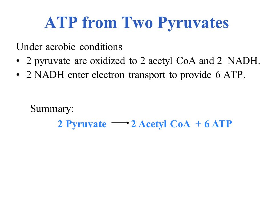ATP from Two Pyruvates Under aerobic conditions