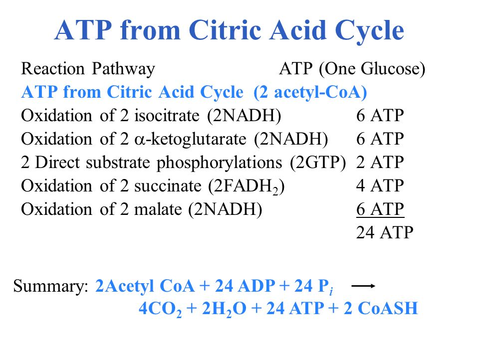 ATP from Citric Acid Cycle