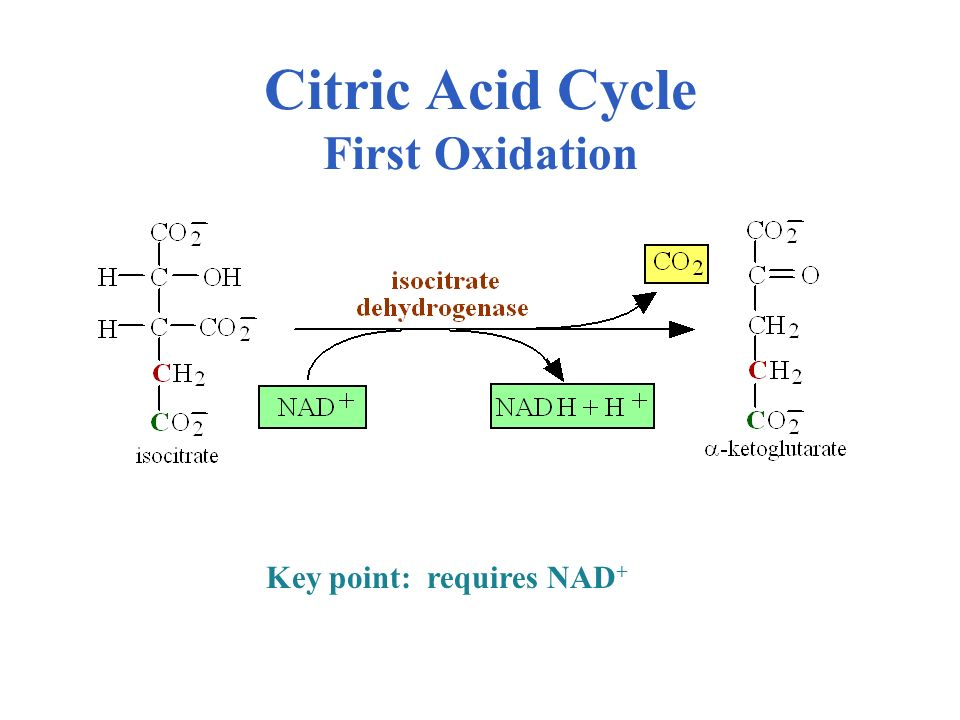 Citric Acid Cycle First Oxidation