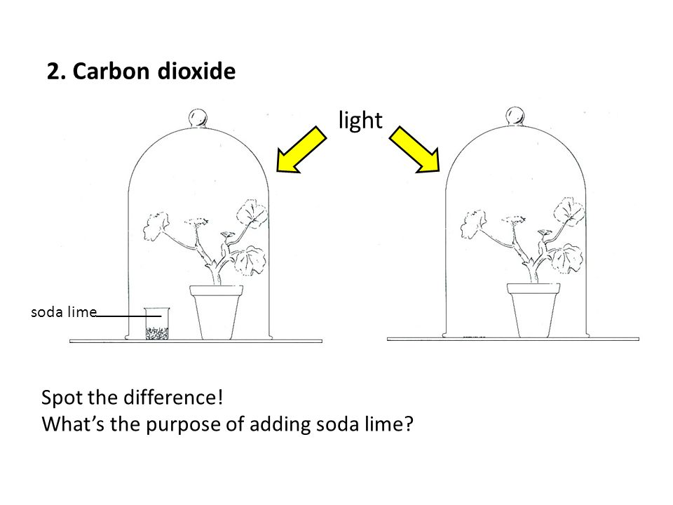2. Carbon dioxide light Spot the difference!