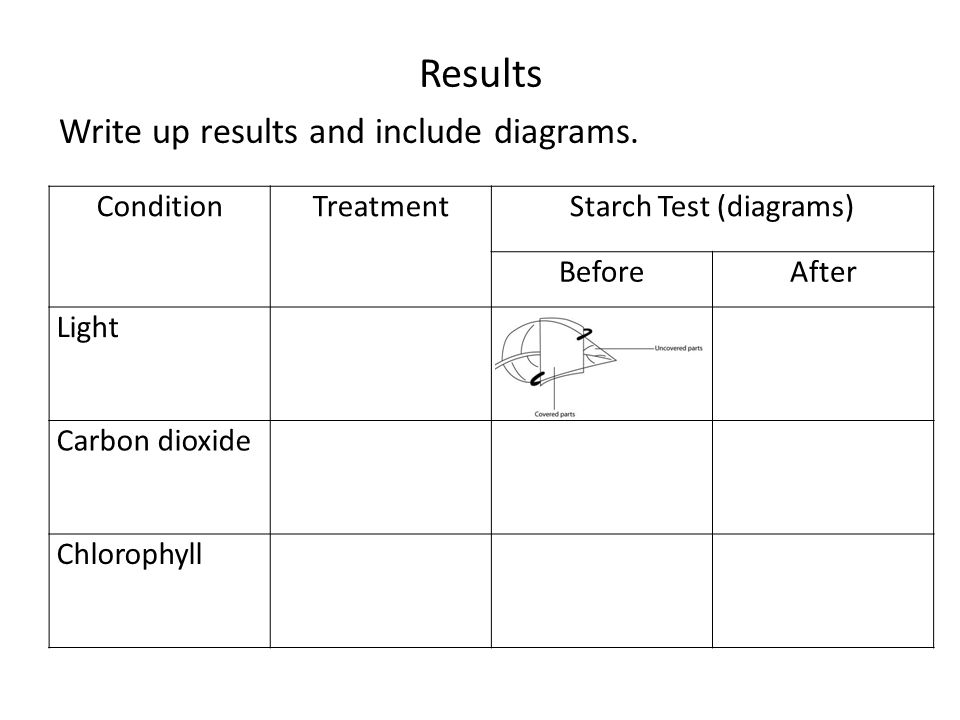 Starch Test (diagrams)