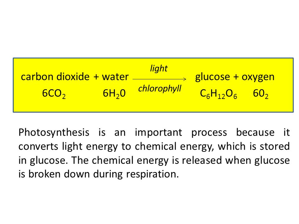 carbon dioxide + water glucose + oxygen 6CO2 6H20 C6H12O6 602 Photosynthesis is an important process because it converts light energy to chemical energy, which is stored in glucose. The chemical energy is released when glucose is broken down during respiration.