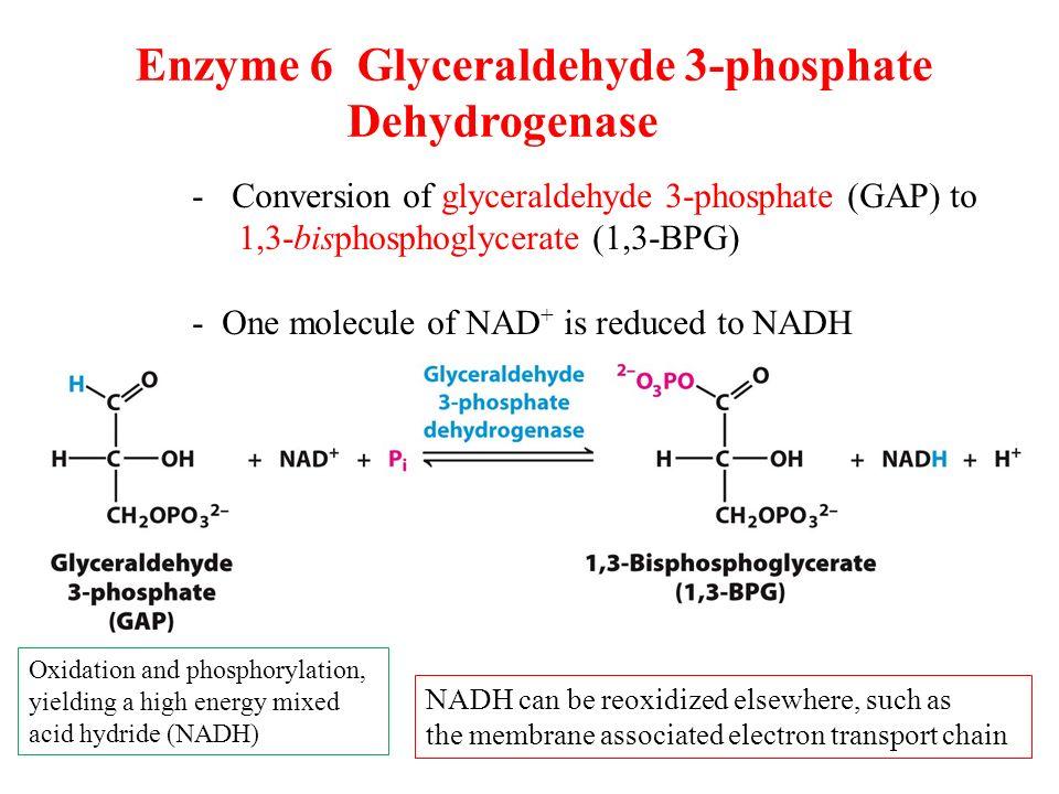 PLOS ONE: Sugar analog synthesis by in vitro biocatalytic cascade ...