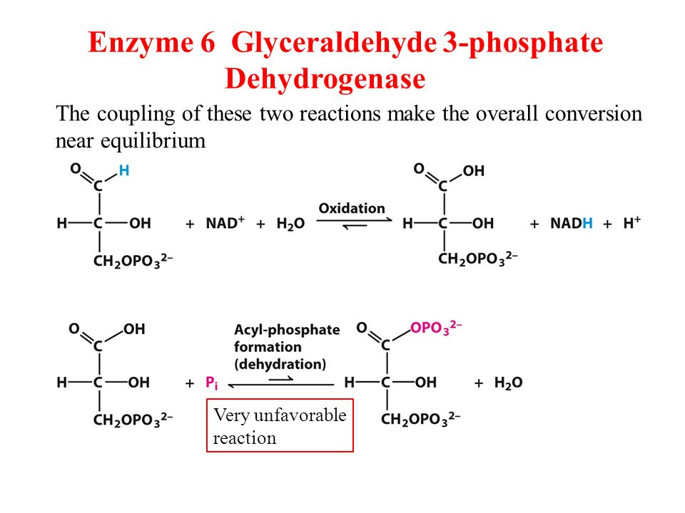 CHAPTER 16 Glycolysis. - ppt download