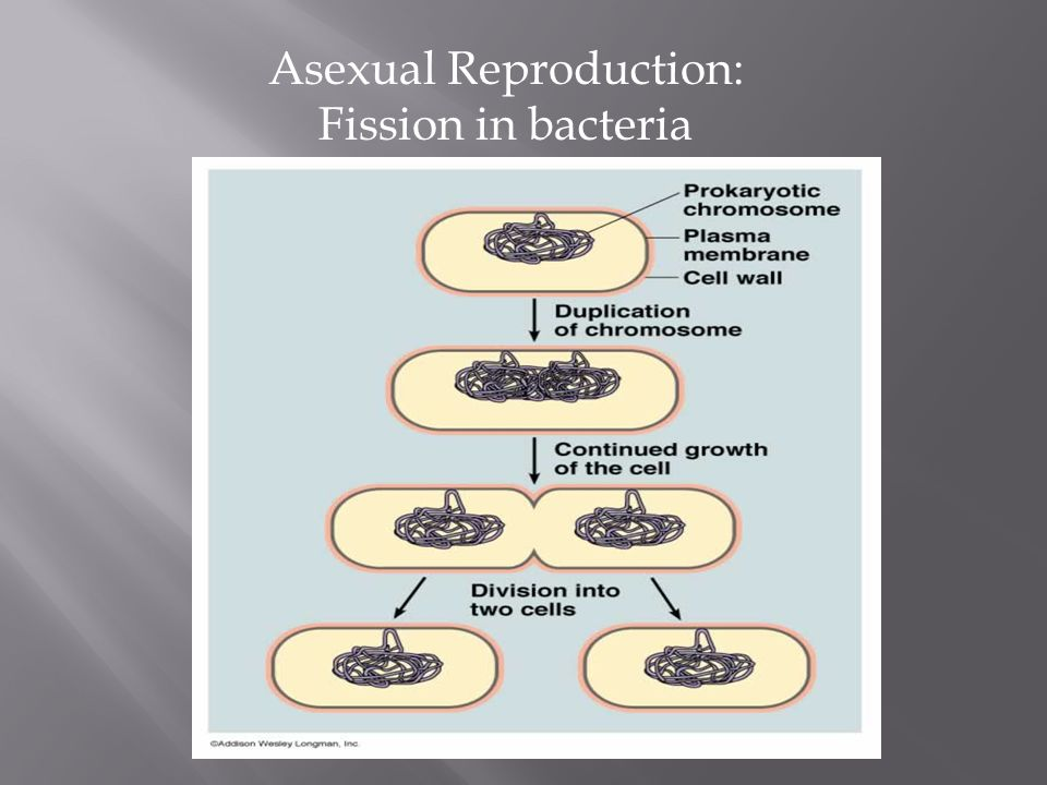 Water fleas asexual reproduction worksheet