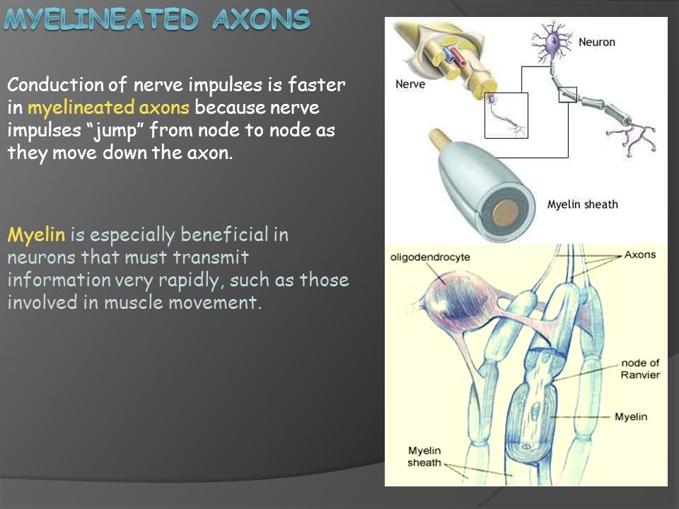 Myelineated axons