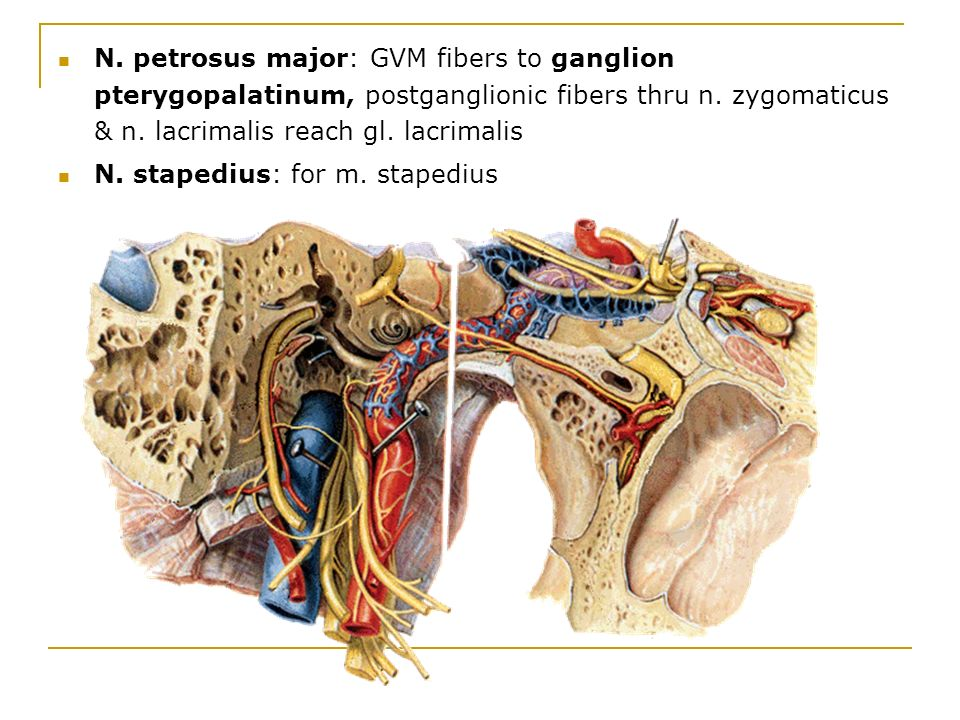 Groß Ganglion Oticum Bilder - Anatomie und Physiologie des ...