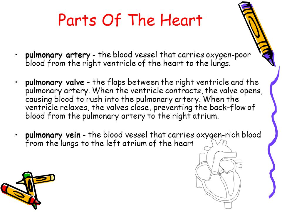 Parts Of The Heart pulmonary artery - the blood vessel that carries oxygen-poor blood from the right ventricle of the heart to the lungs.