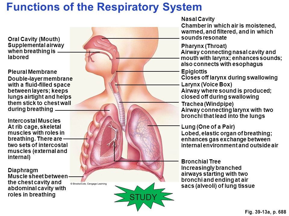 Study This Information Respiration Part Ppt Download