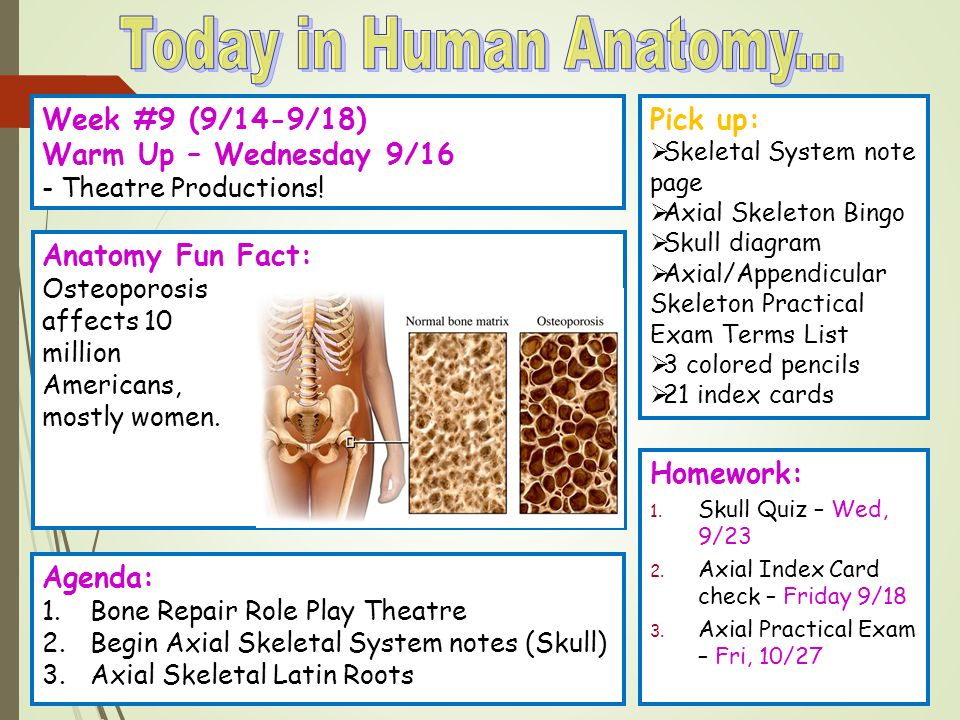 Today In Human Anatomy Week 9 914 918 Warm Up Wednesday 9