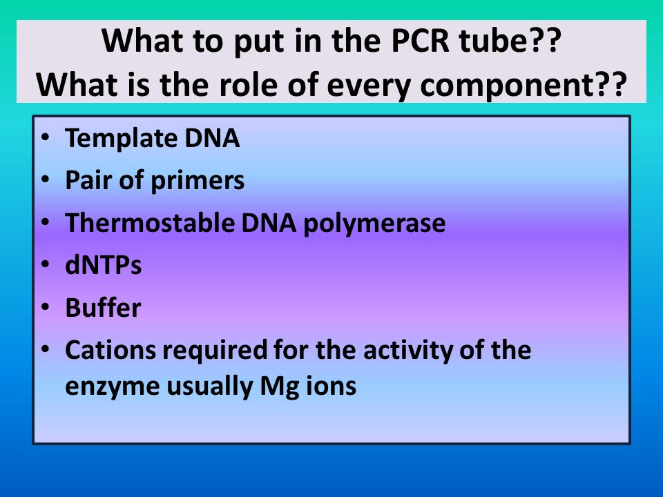 What to put in the PCR tube What is the role of every component