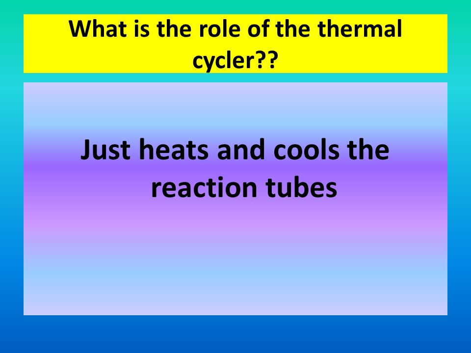 What is the role of the thermal cycler