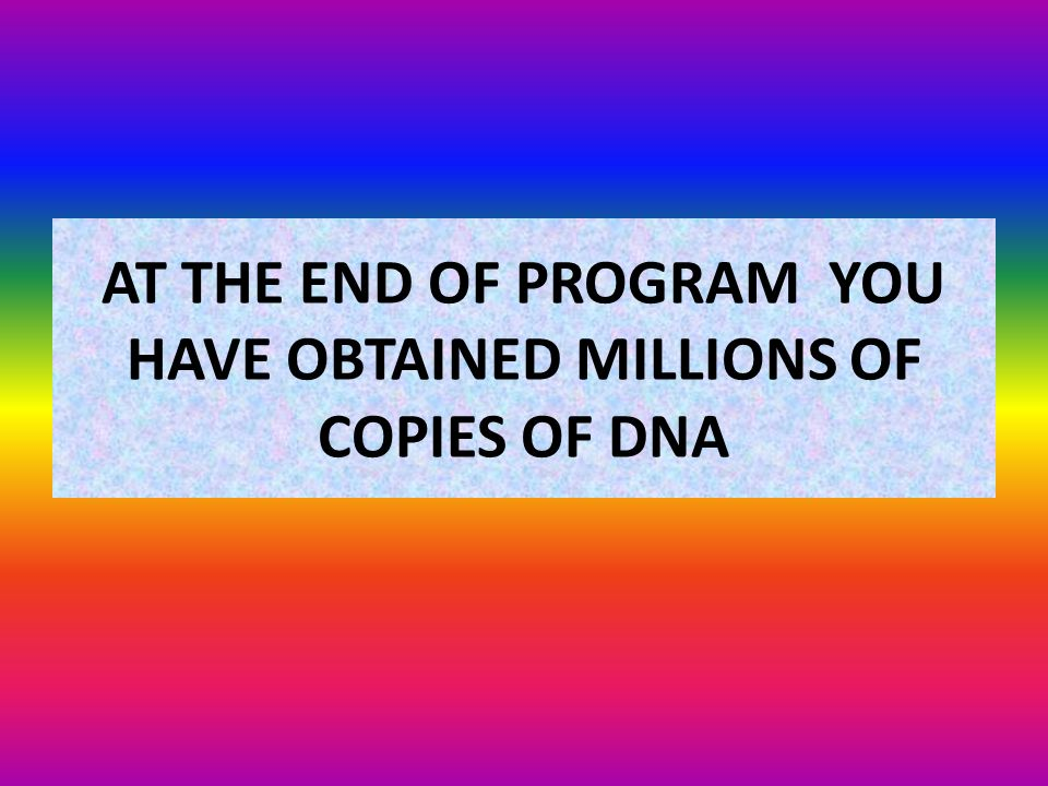 AT THE END OF PROGRAM YOU HAVE OBTAINED MILLIONS OF COPIES OF DNA