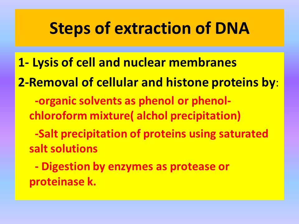 Steps of extraction of DNA