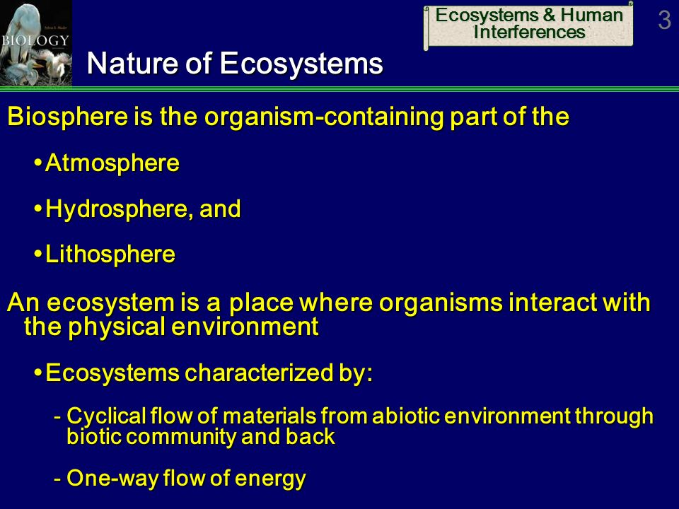 Biology 9th ed sylvia mader ppt download 3 nature fandeluxe Choice Image