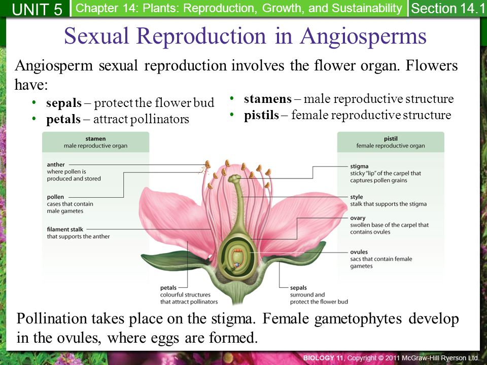 How do some plants reproduce sexually