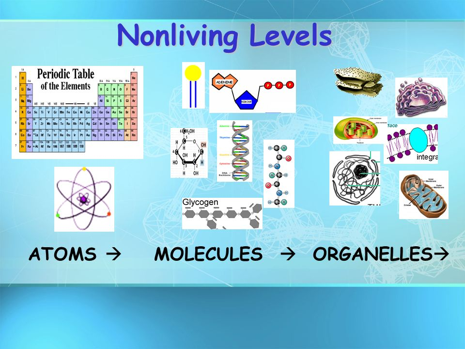 Nonliving Levels ATOMS  MOLECULES  ORGANELLES