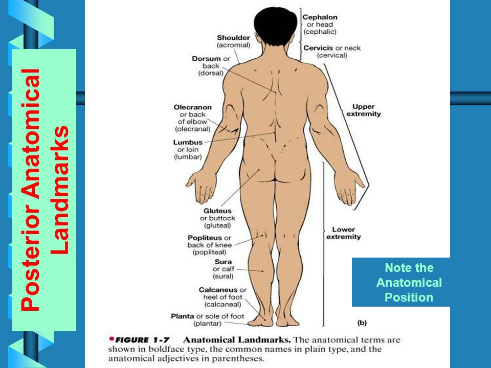 Introduction To Anatomy Physiology Ppt Video Online Download