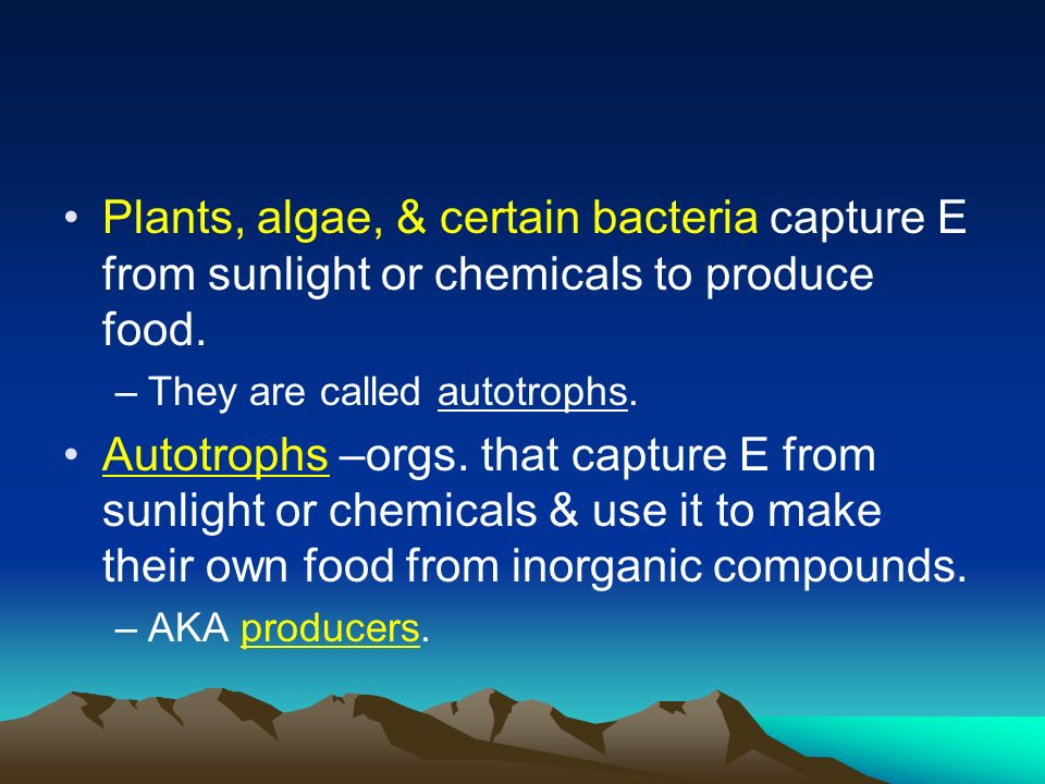 Plants, algae, & certain bacteria capture E from sunlight or chemicals to produce food.