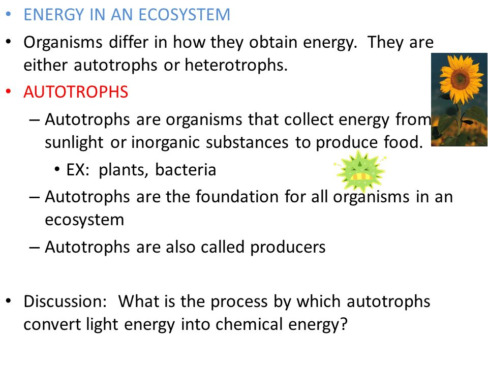 ENERGY IN AN ECOSYSTEM Organisms differ in how they obtain energy. They are either autotrophs or heterotrophs.