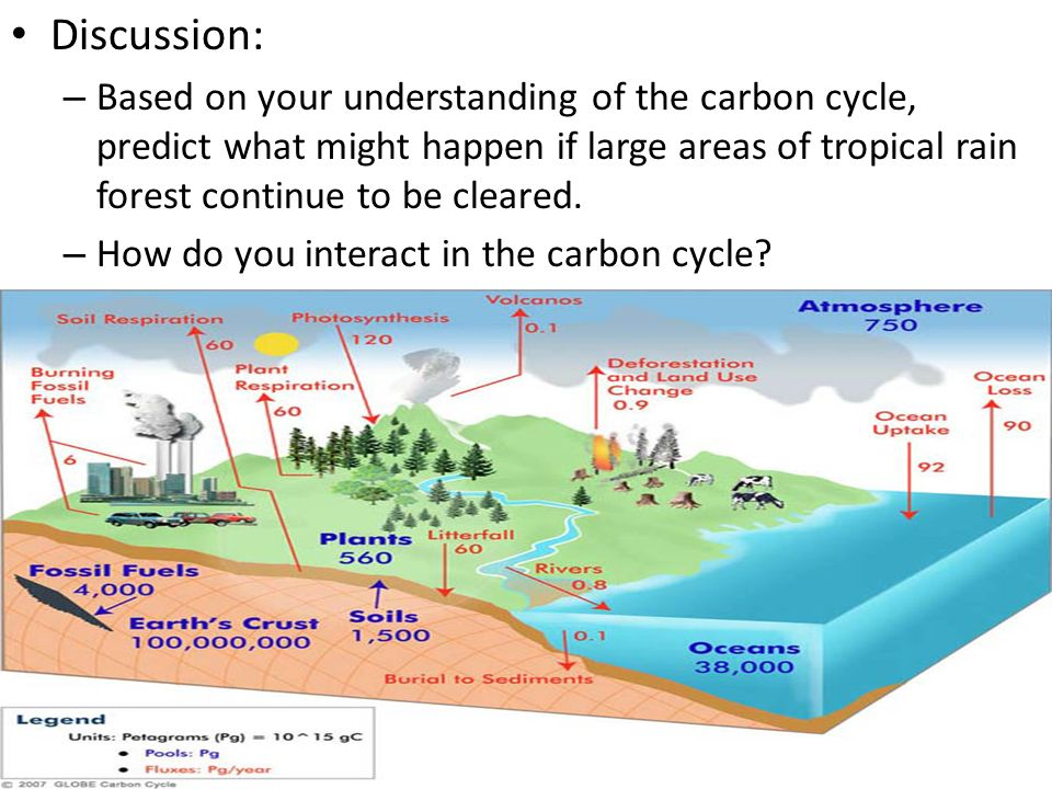 Discussion: Based on your understanding of the carbon cycle, predict what might happen if large areas of tropical rain forest continue to be cleared.