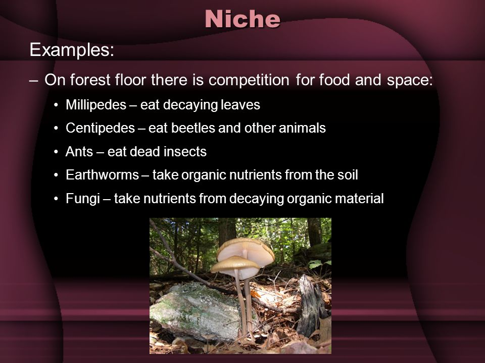 Niche Examples: On forest floor there is competition for food and space: Millipedes – eat decaying leaves.