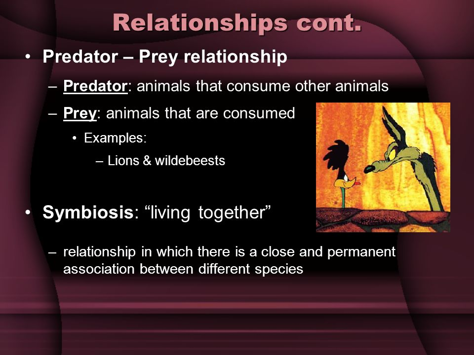 Relationships cont. Predator – Prey relationship