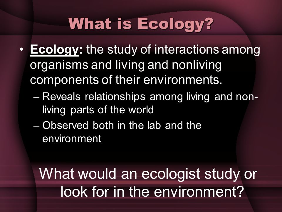 What would an ecologist study or look for in the environment