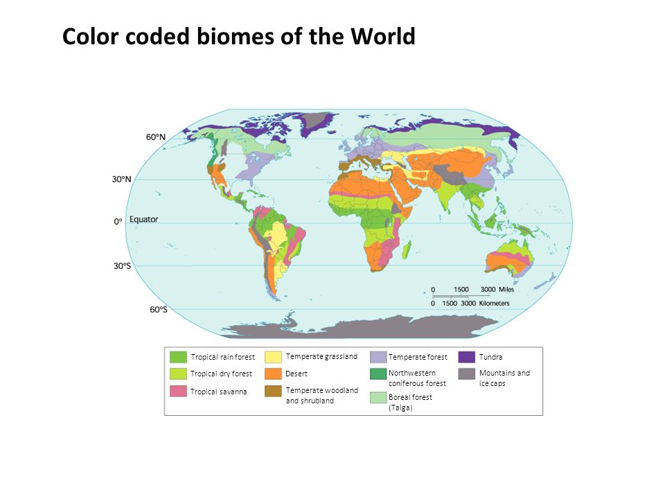 Communities biomes and ecosystems ppt video online download color coded biomes of the world gumiabroncs Image collections