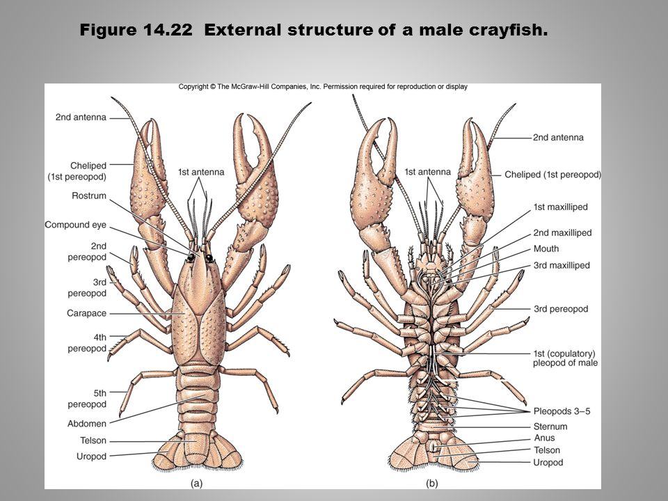 The Arthropods: Blueprint for Success - ppt video online download