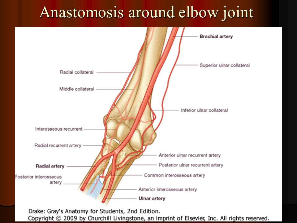 Diagram Of Anastomosis Around Elbow Joint - Trusted Wiring Diagram •
