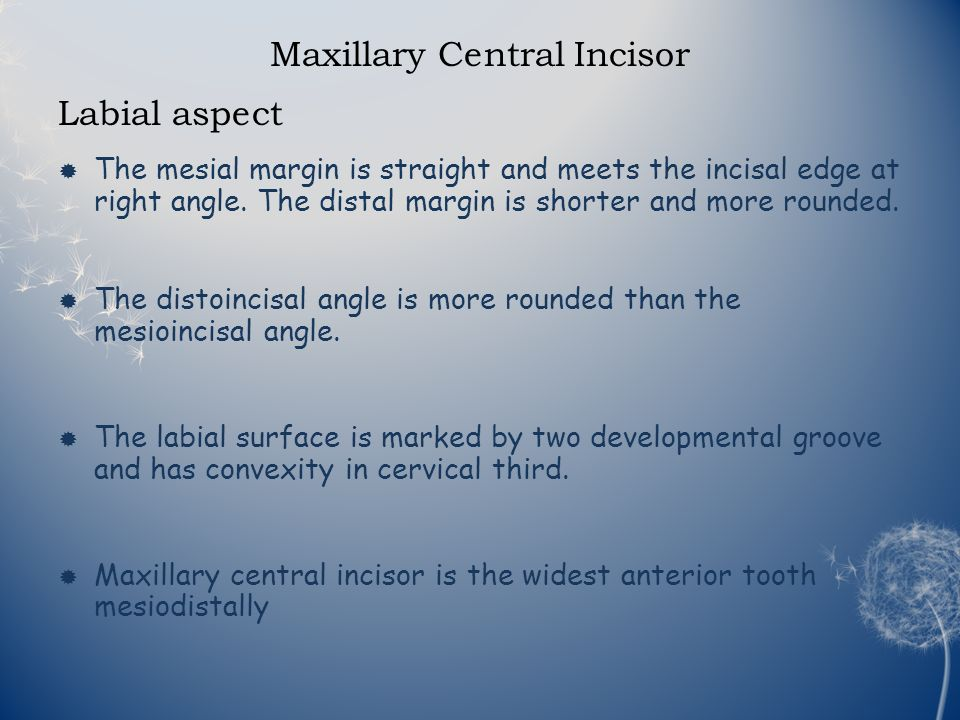Introduction Maxillary incisors are four in number Maxillary central ...