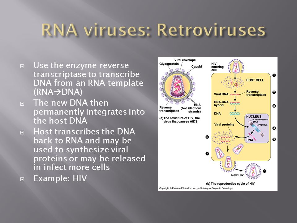 RNA viruses: Retroviruses