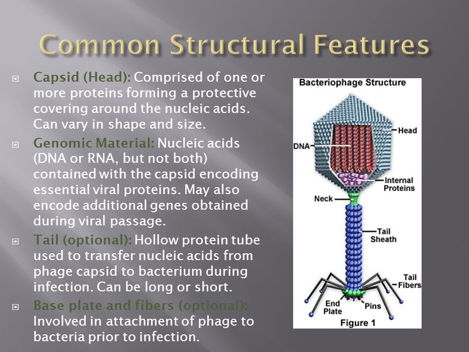 Common Structural Features