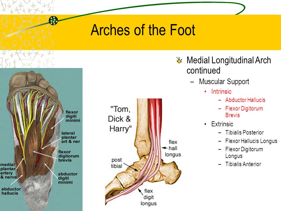 BIO-MECHANICS OF ANKLE-FOOT JOINT - ppt video online download