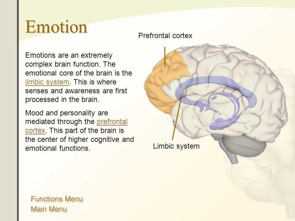 The Human Brain Anatomy And Functions Ppt Download