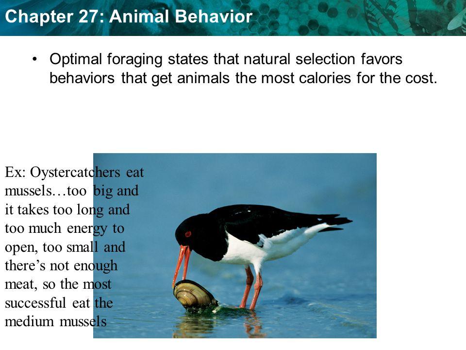 Natural Selection Favors Behaviors That Enhance