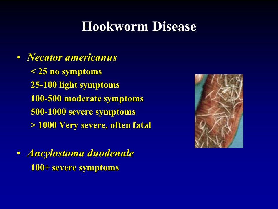 Order Strongylida Hookworms Necator americanus Americas